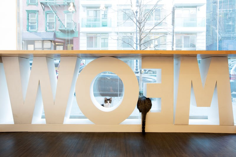 First-Design-Cat-Café-in-NYC-1
