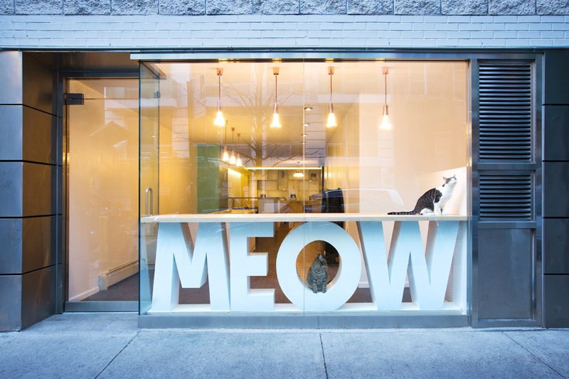 First-Design-Cat-Café-in-NYC-2