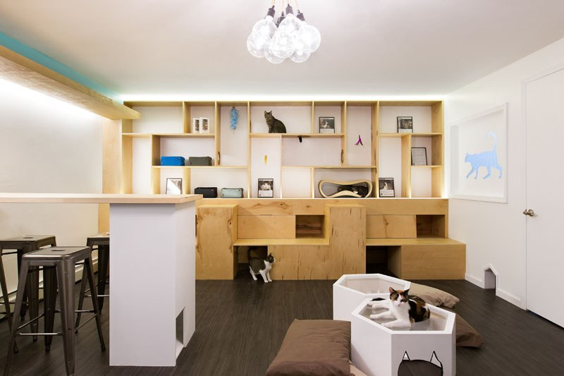 First-Design-Cat-Café-in-NYC-3
