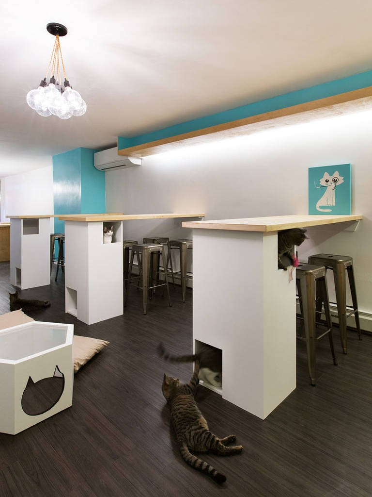 First-Design-Cat-Café-in-NYC-4-768x1024