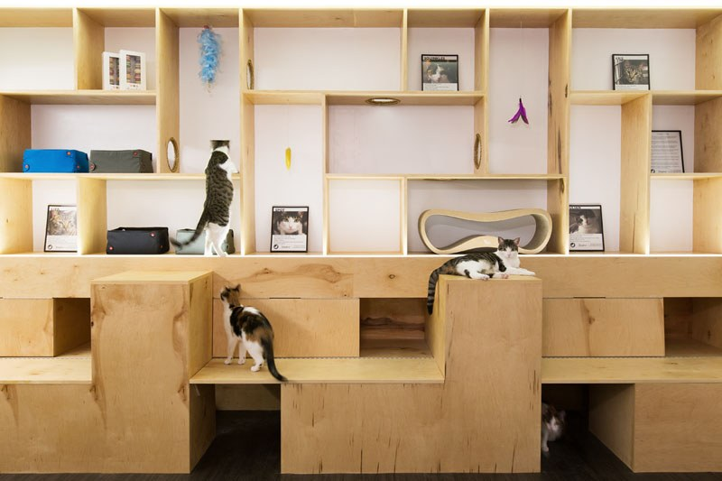 First-Design-Cat-Café-in-NYC-5
