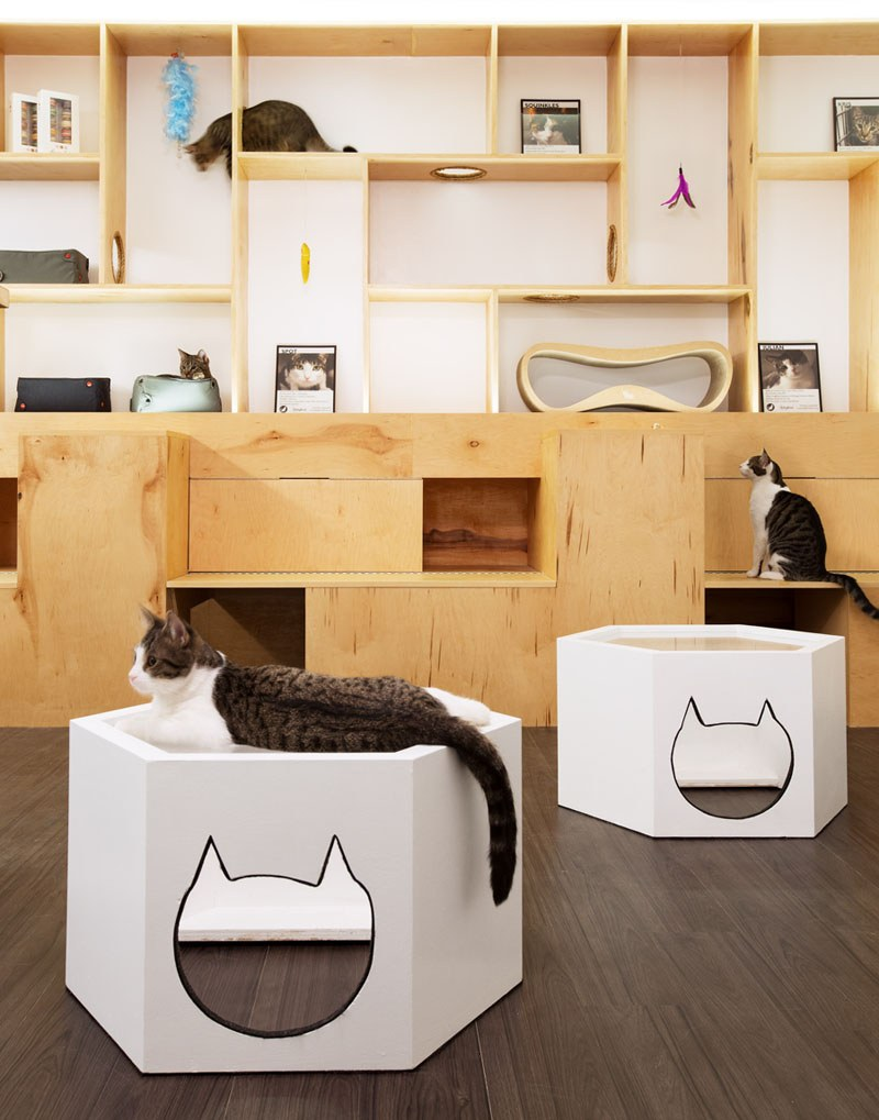 First-Design-Cat-Café-in-NYC-6