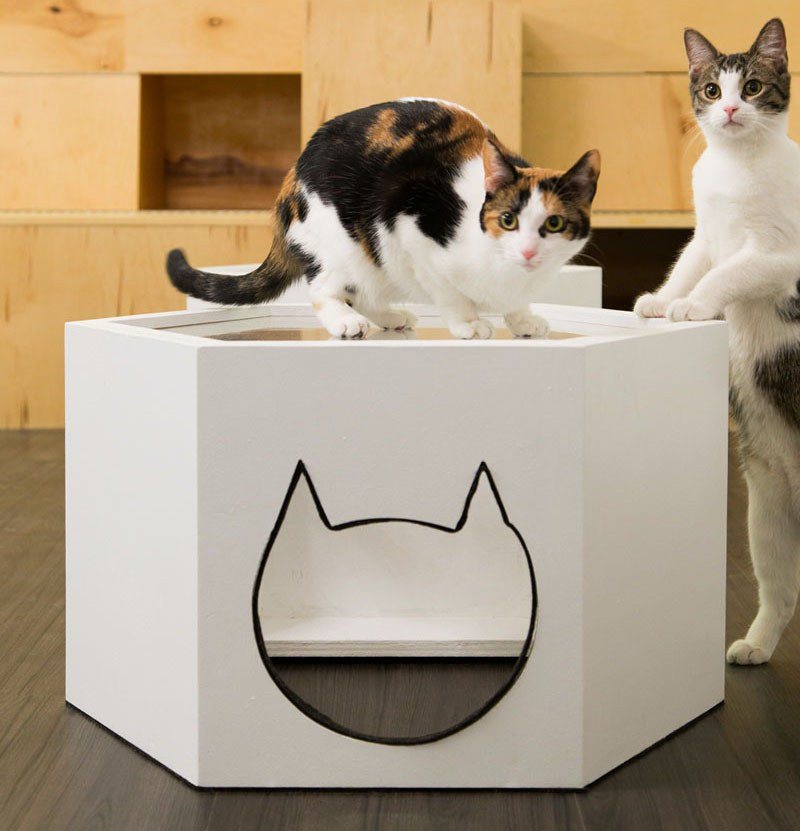 First-Design-Cat-Café-in-NYC-7
