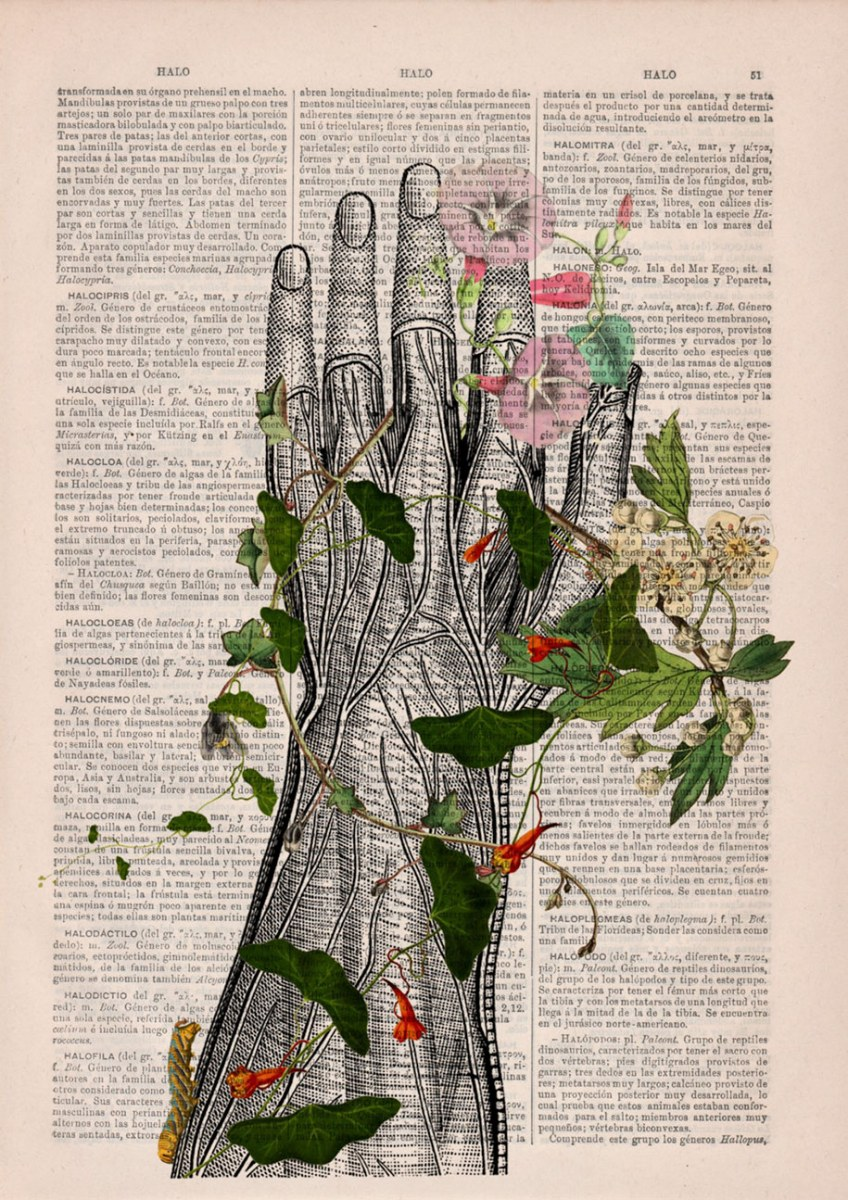 floral-anatomy-illustrations-old-book-pages-prrint-10