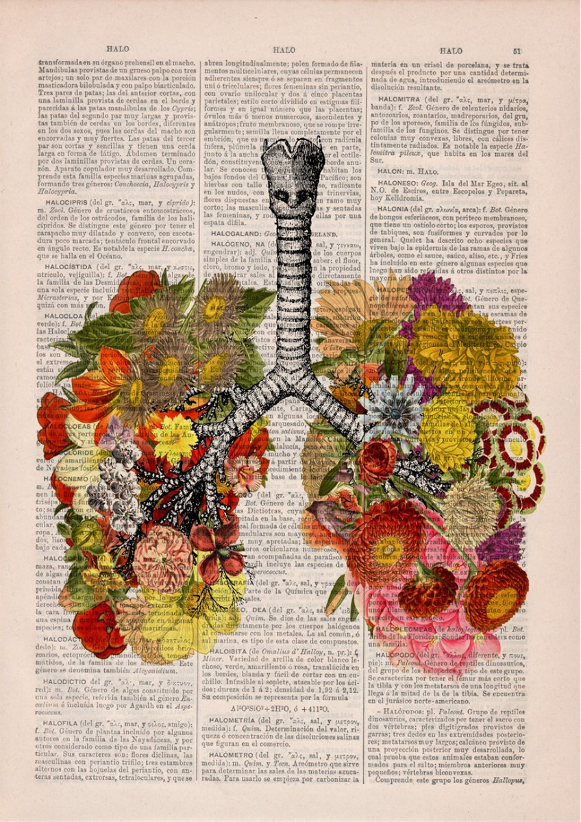 floral-anatomy-illustrations-old-book-pages-prrint-12