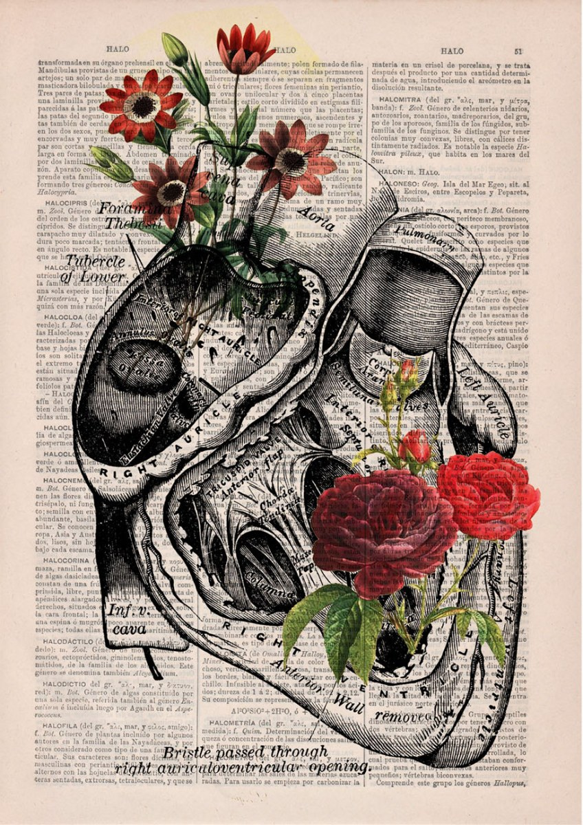 floral-anatomy-illustrations-old-book-pages-prrint-13