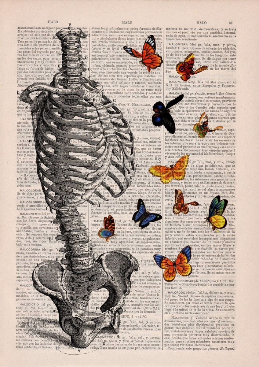 floral-anatomy-illustrations-old-book-pages-prrint-9